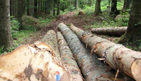 šume RS
