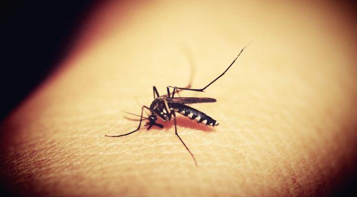 Završeno uništavanje komaraca na 2.500 hektara
