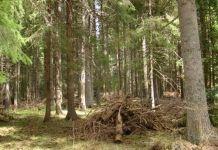 U Rogatici bespravno posječena drva za ogrev