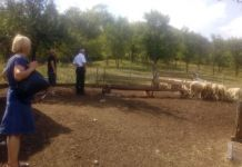 Vukovi napali ovce Višegrad
