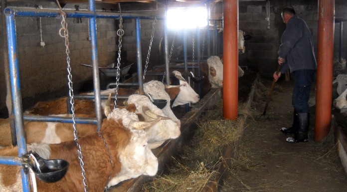 Od prodaje mlijeka i premija ukupna zarada 1.600.000 KM