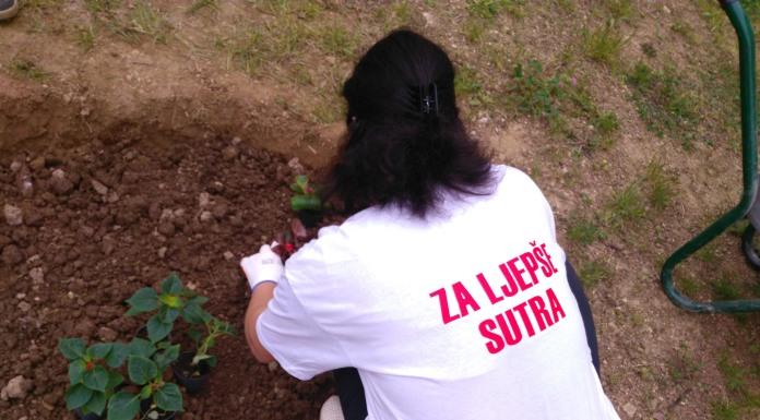 Javnim ustanovama sadnice cvijeća za