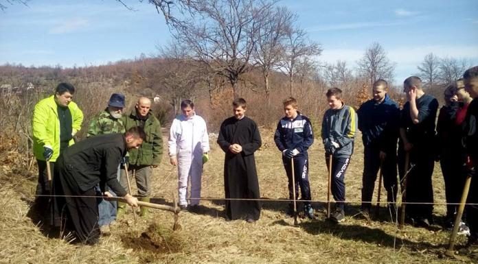 U porti manastira u Ozerkovićima zasađeno 500 sadnica smrče