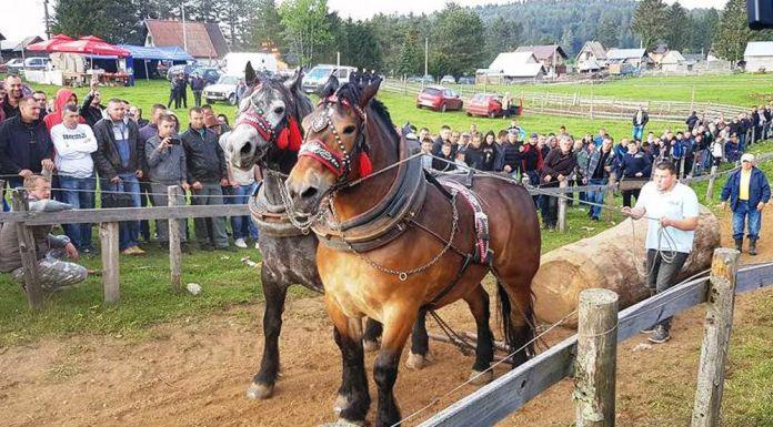 Najbolji konji Zorana Podraščanina iz Mrkonjić Grada