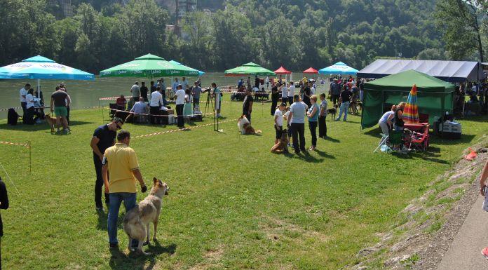 Otvorena prva Međunarodna izložba pasa