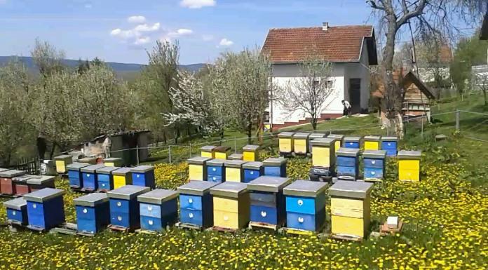 Na Romaniji ove godine slab prinos meda